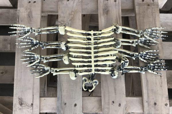 singapore-event-management-halloween-props-rental-8-legged-skeleton-full-legs