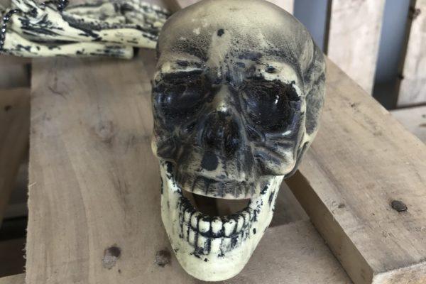 singapore-event-management-halloween-props-rental-8-legged-skeleton-head