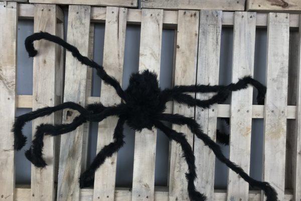 singapore-event-management-our-shop-props-long-leg-spiders-zoom