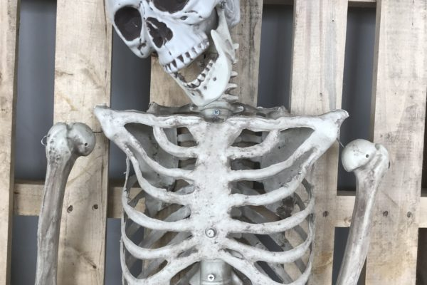 singapore-event-management-our-shop-props-skeleton-zoom